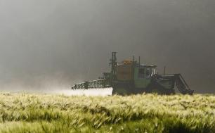Zdjęcie przedstawia prowadzenie oprysku zbóż na polu, w tle zamglony las.